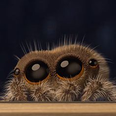 12 Best Lucas The Spider Images Lucas The Spider Hand Spinning