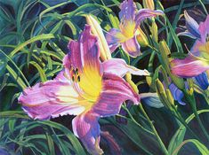 Daylily Art Watercolor Painting Print by Cathy Hillegas, 8x10, watercolor print, watercolor floral, watercolor flowers, pink purple green