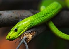 Google Image Result for http://webecoist.com/wp-content/uploads/2010/04/Green_Animals_6x.jpg