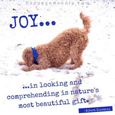 ❤️Hit That Share Button To Motivate Your Friends & Family❤️ ▬▬▬▬▬▬▬▬▬▬▬▬▬▬▬▬▬▬▬ #MondayMotivation #MotivationMonday #quotes #quoteoftheday #motivationalquotes #PuppyLove #PawPrints #Happiness #Goldendoodle #LancasterPuppies www.LancasterPuppies.com Puppy Quotes, Dog Quotes Funny, Feel Good Quotes, Best Quotes, Dog Zoomies, Goldendoodle Puppy For Sale, Winter Quotes, Dog List, Snowy Day