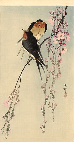 Swallows with cherry blossom - Ohara Koson