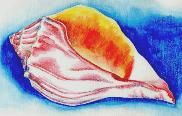 FREE- Sunny Seashell in Watercolor Pencils Picture..What better way to beat the winter blues than by drawing a sunny sea shell to remind you of warmer climates? This project reinforces the lesson on contour line drawing from the lesson section. pdf download file