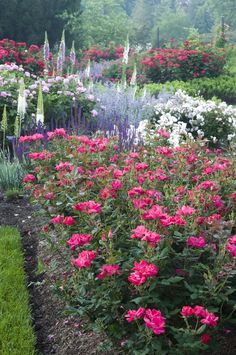 to Plant Beautiful Garden Borders An expert tells us how plantings along the edges can elevate your landscape—and your curb appeal Garden Shrubs, Garden Landscaping, Shade Garden, Morris Arboretum, Comment Planter, Cottage Garden Design, Cottage Garden Borders, Exterior, My Secret Garden
