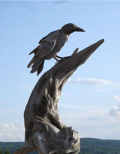 driftwood raven came knock, knock, knock at my door...