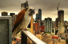 Hybrid Animals Made From Digitally Manipulated Photos by Arne Olav