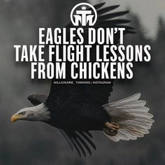 I always told the kiddos Be an eagle not a chicken... WOW who woulda thunk thered be a meme similar!!!!