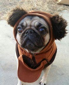 Happy pug-o-weeeeen from this lil ewok