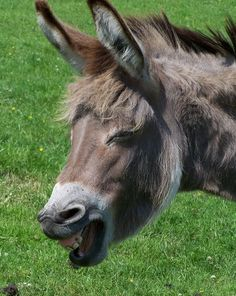 Ik zie heel wat berichten op facebook passeren dat 8 mei 'World Donkey Day' is. Moeilijk om te achterhalen waar dit vandaan komt, of welke organisaties dit initiatief ondersteunen. Ik denk dat het ...
