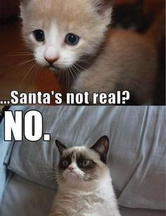 Grumpy Cat - Santa's not real? Crush a child's dreams! good