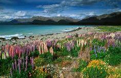 Resultado de imagem para flora y fauna de nueva zelanda