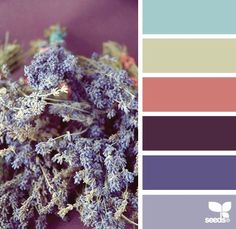 color combinations, flowers, nature