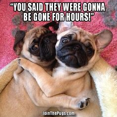 Caption Us Wednesday Winner for April 3, 2013 - Join the Pugs