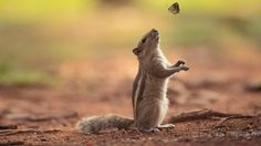 Adorable Pics To Celebrate Squirrel Lovely Day 11 Tier Wallpaper, Animal Wallpaper, Animals And Pets, Cute Animals, Cute Butterfly, Lovely Creatures, Tier Fotos, Mundo Animal, Hamsters