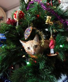 """Cats Love Christmas Trees. I guess if you have a small cat, and no breakable ornaments and really make sure that tree isn't gonna """"TIMBER"""", then why not!? ;)"""