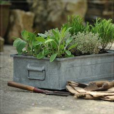 These old industrial component trays make fantastic planters for herbs or salad. They are in good solid condition and are especially useful when space is limited Spring Garden, Garden Containers, Plants, Diy Herb Garden, Herbs, Vintage Garden, Herb Garden, Country Gardening, Garden