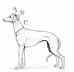 How to measure for a Martingale Dog Collar