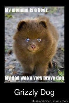 mi mama era una osa.... y mi papa un perro muuuy valiente