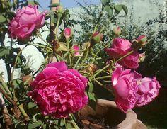 meu jardim em flor