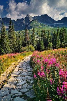 Summer in the Tatra Mountains, Poland, copyright by Przemysław Piegza Landscape Photography, Nature Photography, Places To Travel, Places To Visit, Finland Travel, Tatra Mountains, Winter Pictures, Greatest Adventure, Nightlife Travel
