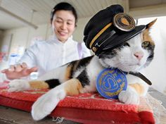 RIP Tama, whoheld sway as stationmaster of the Kishi train station since 2007 (article link)