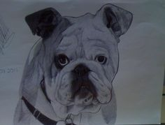 Drawing Commissions, French Bulldog, My Etsy Shop, Drawings, Dogs, Artist, Artwork, Animals, Work Of Art