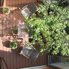 ・・・OpenAirCafe・・・ 中庭