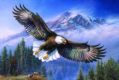 """Anthem - American Bald Eagle"""
