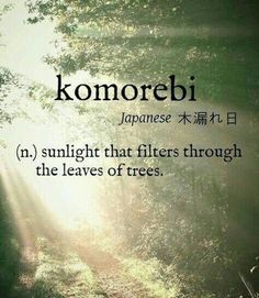 Lost in the words I ponder .komorebi [Japanese 木漏れ日] ~ (n.) sunlight that filters through the leaves of trees. The Words, Weird Words, Cool Words, Unusual Words, Unique Words, Interesting Words, Citation Nature, Aesthetic Words, Nature Quotes