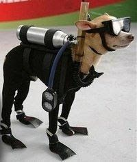 Funny Scuba Puppy Co
