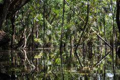 Amazon Forest 15 de Eduardo Marco. Acheter des images et photos d'art en ligne  | LUMAS  ✓