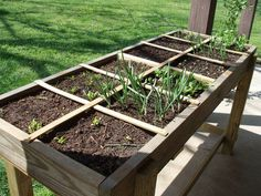 Square foot gardening for shallow rooted vegetables....