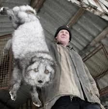 Boycott Jennifer Lopez, Protest Her Wearing Fur.  Look at the fear in his eyes.  This should NEVER happen!