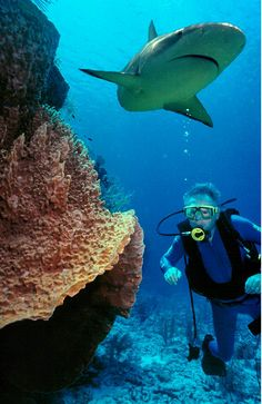Coiba National Marine Park,Panama: The best diving in Central America! www.ecocircuitos.com