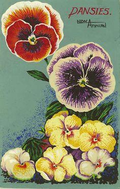 vintage pansies