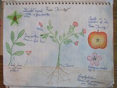 Grade 5 student lesson book.