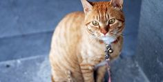 cat cat 8