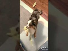 Funny Animal Videos, Funny Animals, Dogs, Cute, Pet Dogs, Kawaii, Funny Animal, Doggies, Hilarious Animals