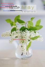 Bienvenido querido May! El | s i n n e n r a u s c h, #Bienvenido #cotizacionesdesalud #queri... Bienvenido querido May! El | s i n n e n r a u s c h Hello May, Spring Quotes, Hacks, Glass Vase, Bloom, Floral, Free, Wallpaper, Up