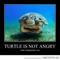 Sorry, turtle - I'll try to do better.