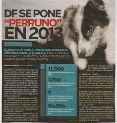 Se castigará con cárcel el maltrato animal y se anuncia la creación de nuevos hospitales para perros y gatos.