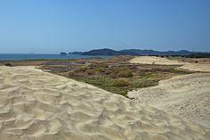 희귀 생태계의 보고! 태안 신두리 해안사구, 관광 명소로 각광