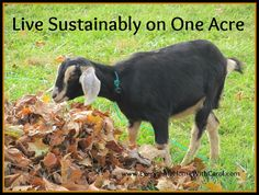 How to live sustainably on one acre. What do you do?