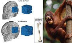 Modern humans have become WEAKLINGS compared with ancient ancestors