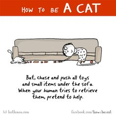 HOW TO BE A CAT: Bat, chase and push all toys and small items under the sofa. When your human tries to retrieve them, pretend to help.