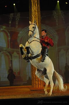 Majestic Lipizanner ~ Gosia Makosa, I would go to the Spanish Riding School Most Beautiful Animals, Beautiful Horses, Pretty Horses, Horse Love, Lippizaner, Lipizzan, Spanish Riding School, Majestic Horse, Dressage Horses