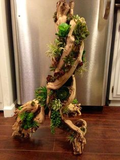 There are many great methods by which you are able to turn driftwood into amazing ornaments for your house. Some were too small and a few regions of the driftwood didn't have sufficient room to accommodate both moss AND a… Continue Reading → Succulents In Containers, Cacti And Succulents, Planting Succulents, Planting Flowers, Driftwood Planters, Driftwood Art, Garden Art, Garden Plants, House Plants