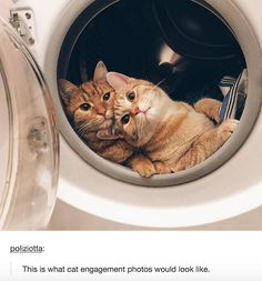 """This is what cat engagement photos would look like."""