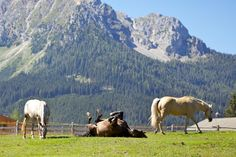 ranch horse farm | Holidays on a horse ranch in South Tyrol