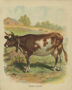 House of Hawthornes: Vintage Animal Printables