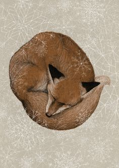 Sleepy fox is already dreaming of winter.